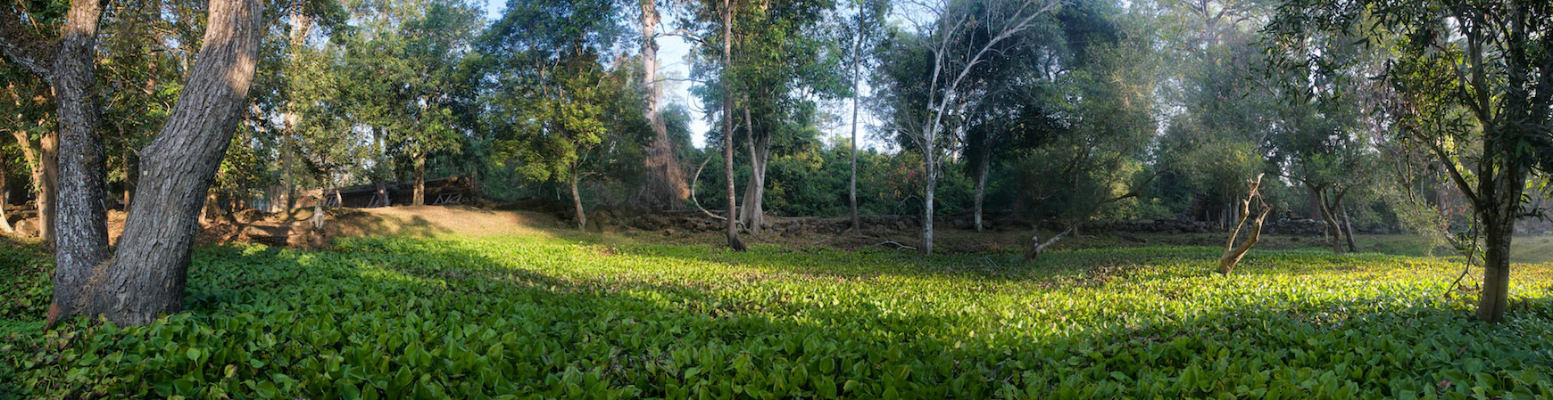 preah-khan-vegetation-pano.jpg